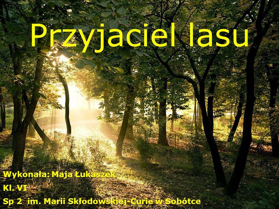 Przyjaciel lasu Wykonała: Maja Łukaszek Kl. VI Sp 2 im. Marii Skłodowskiej-Curie w Sobótce