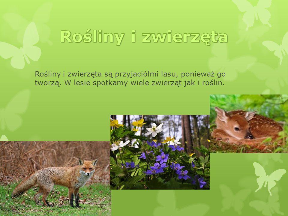 Rośliny i zwierzęta są przyjaciółmi lasu, ponieważ go tworzą. W lesie spotkamy wiele zwierząt jak i roślin.