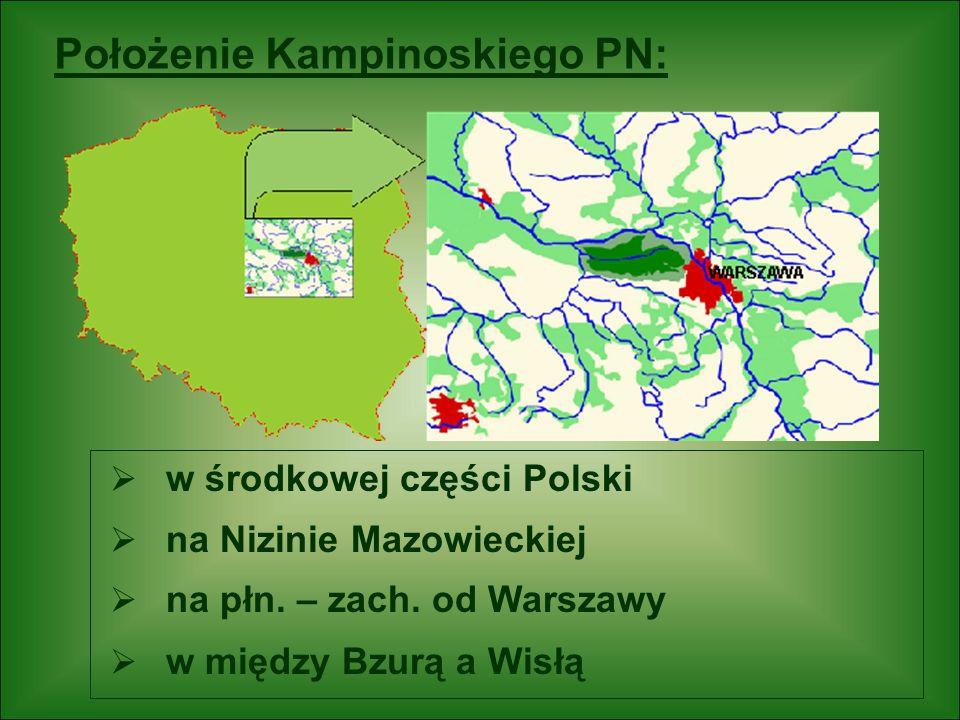  w środkowej części Polski  na Nizinie Mazowieckiej  na płn. – zach. od Warszawy  w między Bzurą a Wisłą Położenie Kampinoskiego PN: