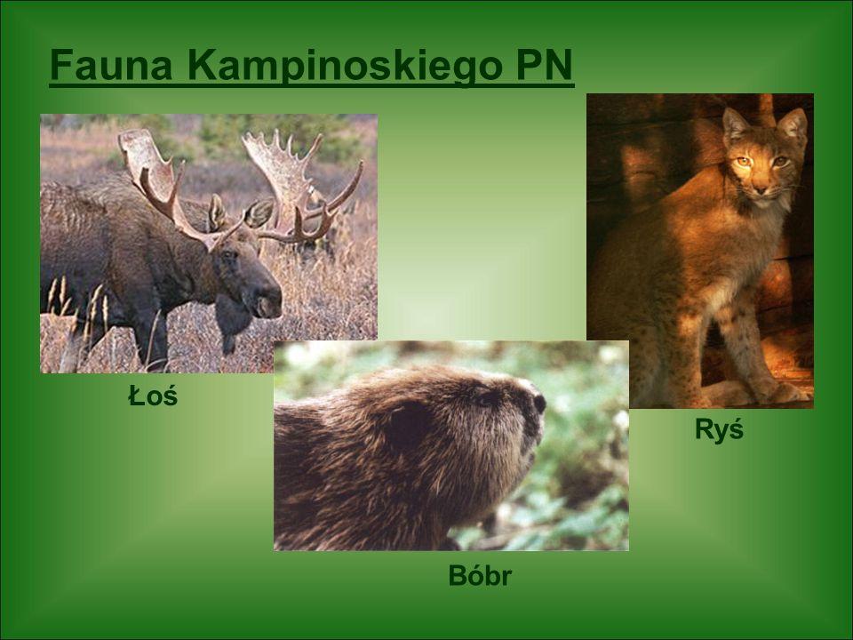 Fauna Kampinoskiego PN Bocian czarny Czapla siwa Żuraw