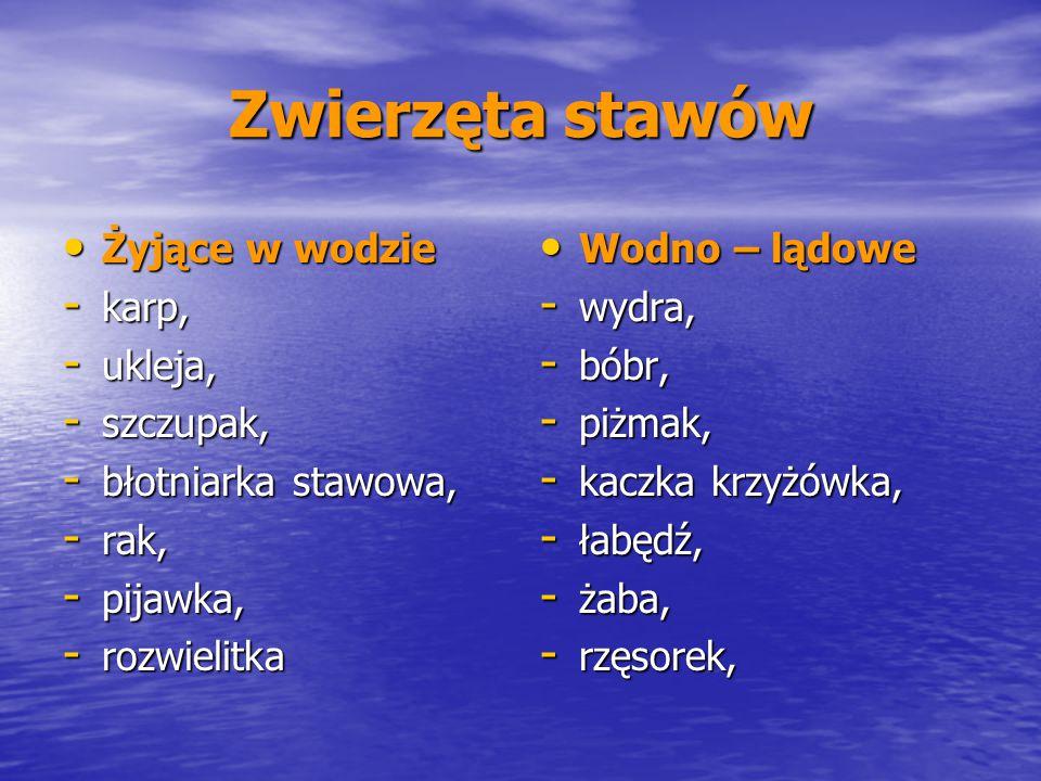 Zwierzęta stawów Żyjące w wodzie Żyjące w wodzie - karp, - ukleja, - szczupak, - błotniarka stawowa, - rak, - pijawka, - rozwielitka Wodno – lądowe Wo