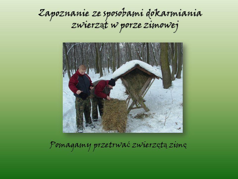 Pomagamy przetrwa ć zwierz ę t ą zim ę Zapoznanie ze sposobami dokarmiania zwierz ą t w porze zimowej