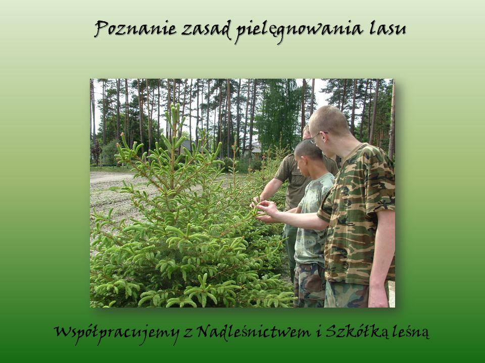 Współpracujemy z Nadle ś nictwem i Szkółk ą le ś n ą Poznanie zasad piel ę gnowania lasu
