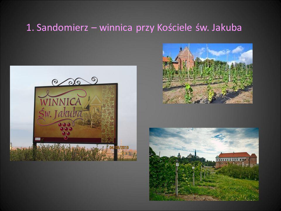 1.Sandomierz – winnica przy Kościele św. Jakuba
