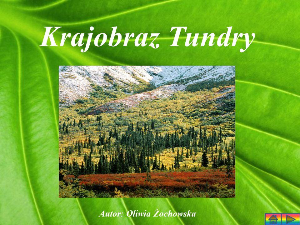 Krajobraz Tundry Autor: Oliwia Żochowska