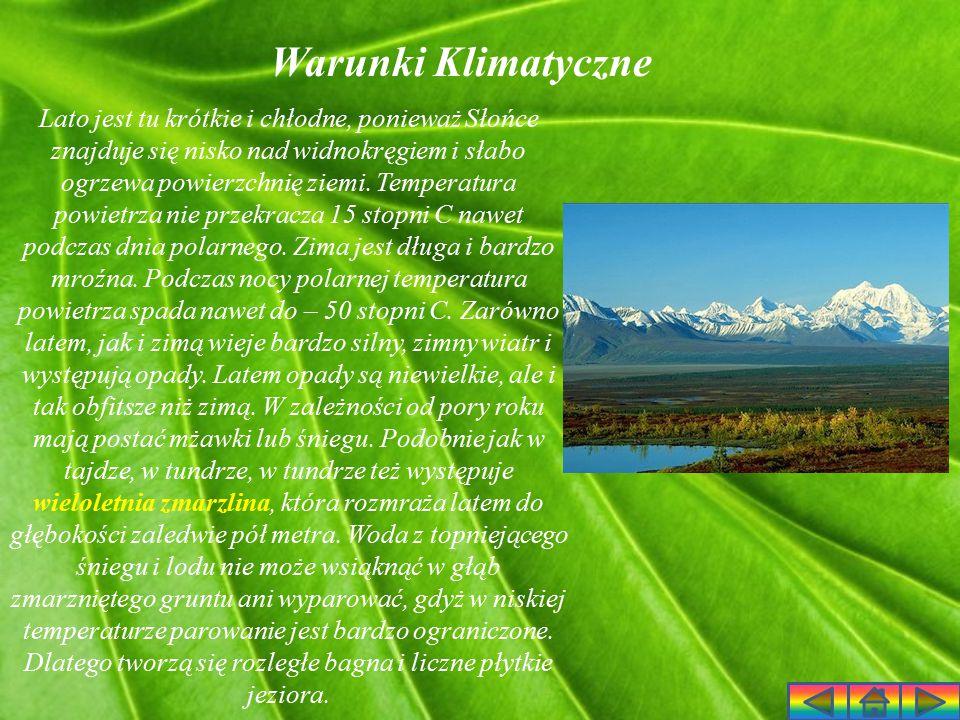 Roślinność Tundry Skrajnie niska temperatura podczas długiej zimy, cienka warstwa rozmarzającej gleby podczas krótkiego lata, a także zimny i porywisty wiatr to czynniki, które sprawiają, że tundra jest obszarem bezleśnym.