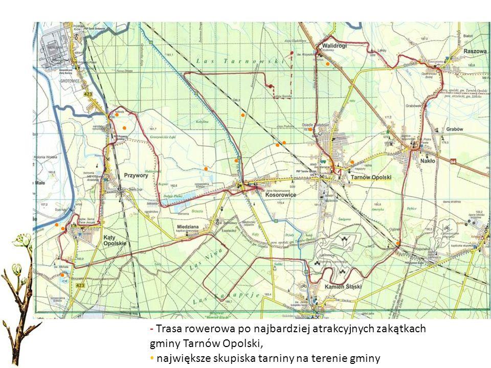 - Trasa rowerowa po najbardziej atrakcyjnych zakątkach gminy Tarnów Opolski, największe skupiska tarniny na terenie gminy