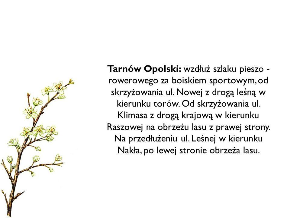 Tarnów Opolski: wzdłuż szlaku pieszo - rowerowego za boiskiem sportowym, od skrzyżowania ul. Nowej z drogą leśną w kierunku torów. Od skrzyżowania ul.