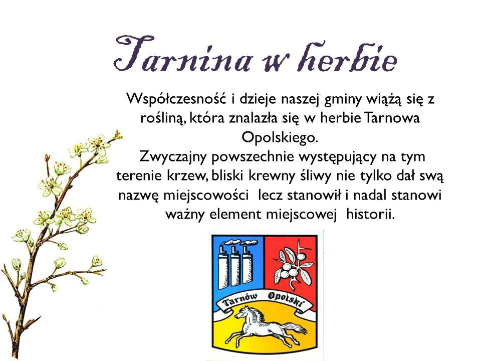 Tarnina w herbie Współczesność i dzieje naszej gminy wiążą się z rośliną, która znalazła się w herbie Tarnowa Opolskiego. Zwyczajny powszechnie występ