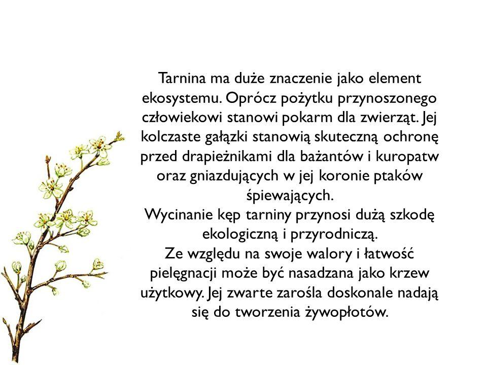 Tarnina ma duże znaczenie jako element ekosystemu. Oprócz pożytku przynoszonego człowiekowi stanowi pokarm dla zwierząt. Jej kolczaste gałązki stanowi