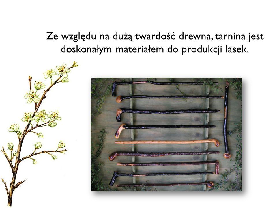 Ze względu na dużą twardość drewna, tarnina jest doskonałym materiałem do produkcji lasek.