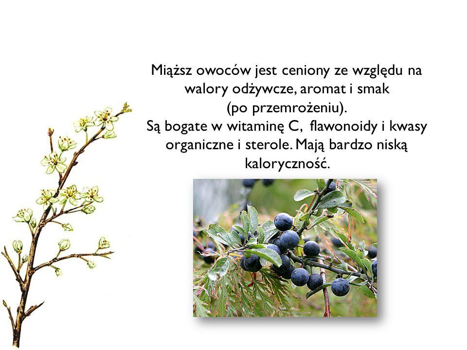 Miąższ owoców jest ceniony ze względu na walory odżywcze, aromat i smak (po przemrożeniu).