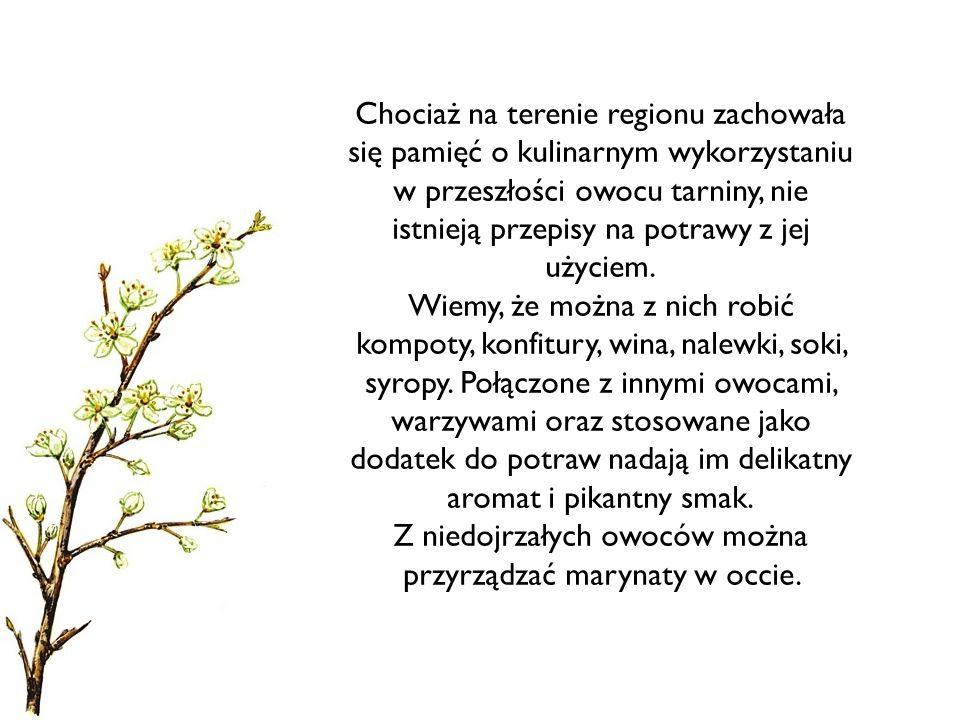 Chociaż na terenie regionu zachowała się pamięć o kulinarnym wykorzystaniu w przeszłości owocu tarniny, nie istnieją przepisy na potrawy z jej użyciem.