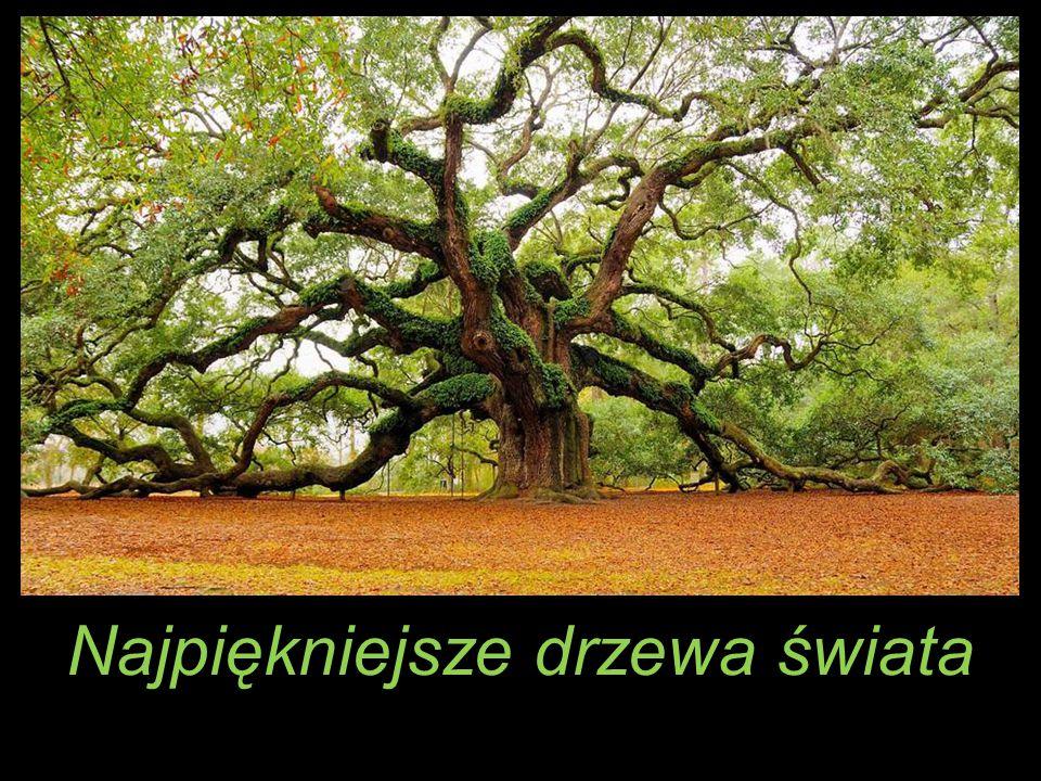 Najpiękniejsze drzewa świata