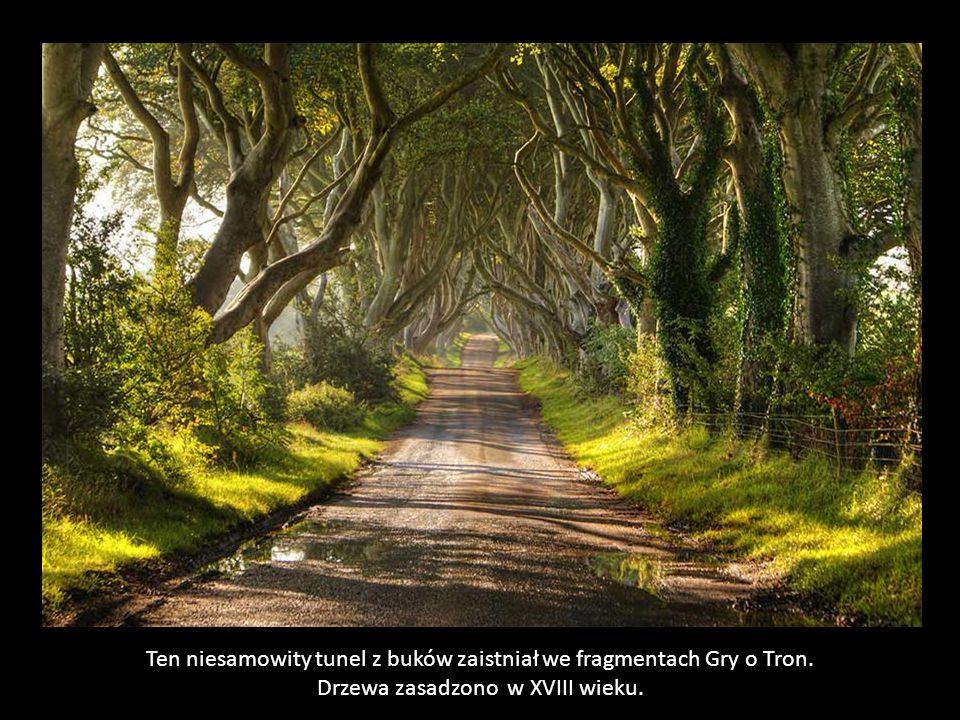"""The Dark Hedges – """"mroczny szpaler""""- najpiękniejsza droga w Irlandii Północnej."""