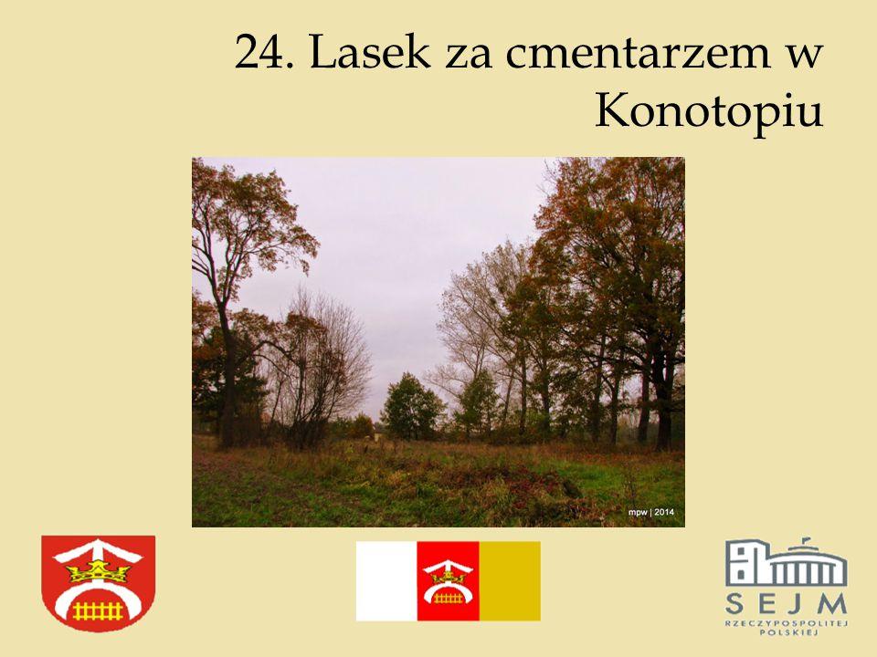 24. Lasek za cmentarzem w Konotopiu