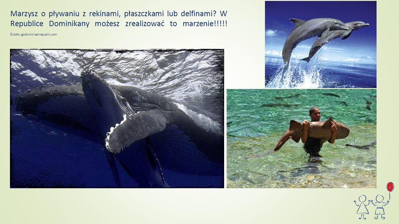 Marzysz o pływaniu z rekinami, płaszczkami lub delfinami? W Republice Dominikany możesz zrealizować to marzenie!!!!! Źródło: godominicanrepublic.com