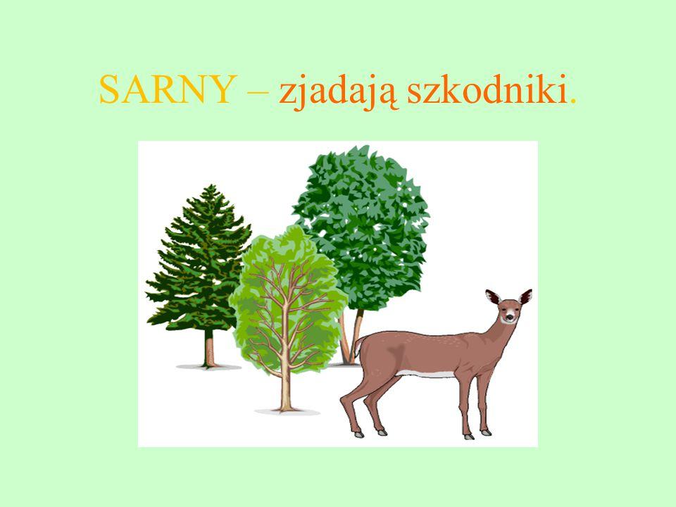 SARNY – zjadają szkodniki.