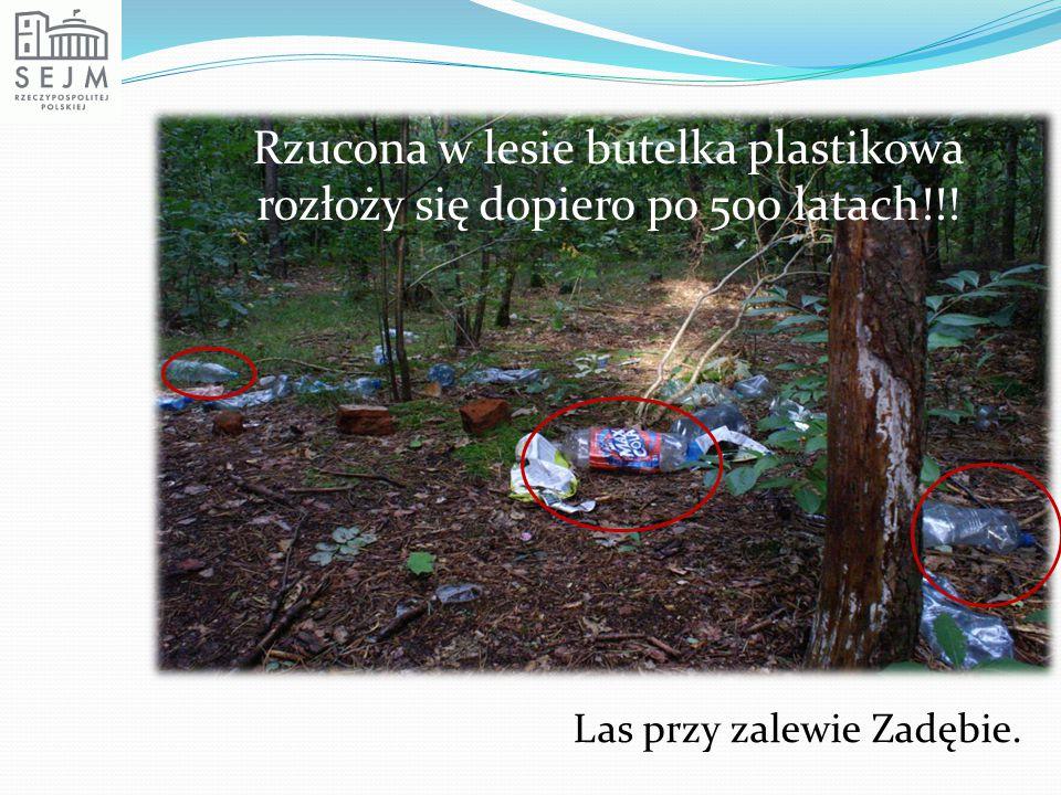 Rzucona w lesie butelka plastikowa rozłoży się dopiero po 500 latach!!! Las przy zalewie Zadębie.
