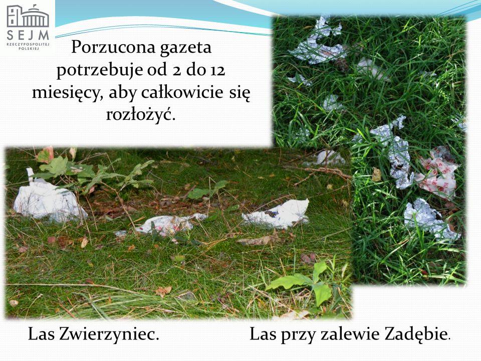 Porzucona gazeta potrzebuje od 2 do 12 miesięcy, aby całkowicie się rozłożyć. Las Zwierzyniec.Las przy zalewie Zadębie.