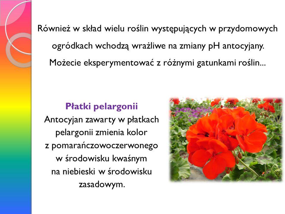 Również w skład wielu roślin występujących w przydomowych ogródkach wchodzą wrażliwe na zmiany pH antocyjany.