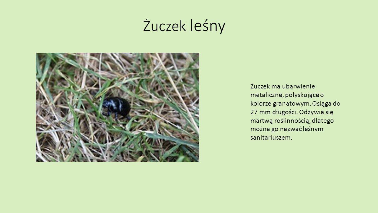Mrówki Jest wiele rodzajów mrówek.