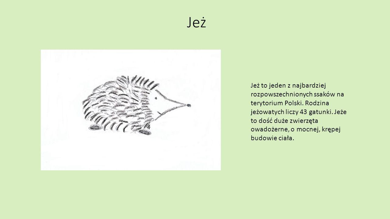 Sikorka Sikorka to rodzaj ptaka z rzędu wróblowatych.