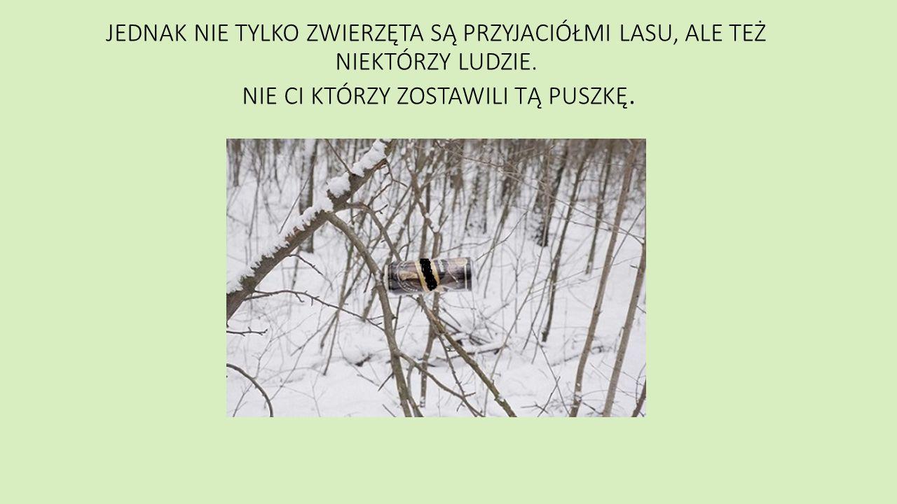 Jeż Jeż to jeden z najbardziej rozpowszechnionych ssaków na terytorium Polski.