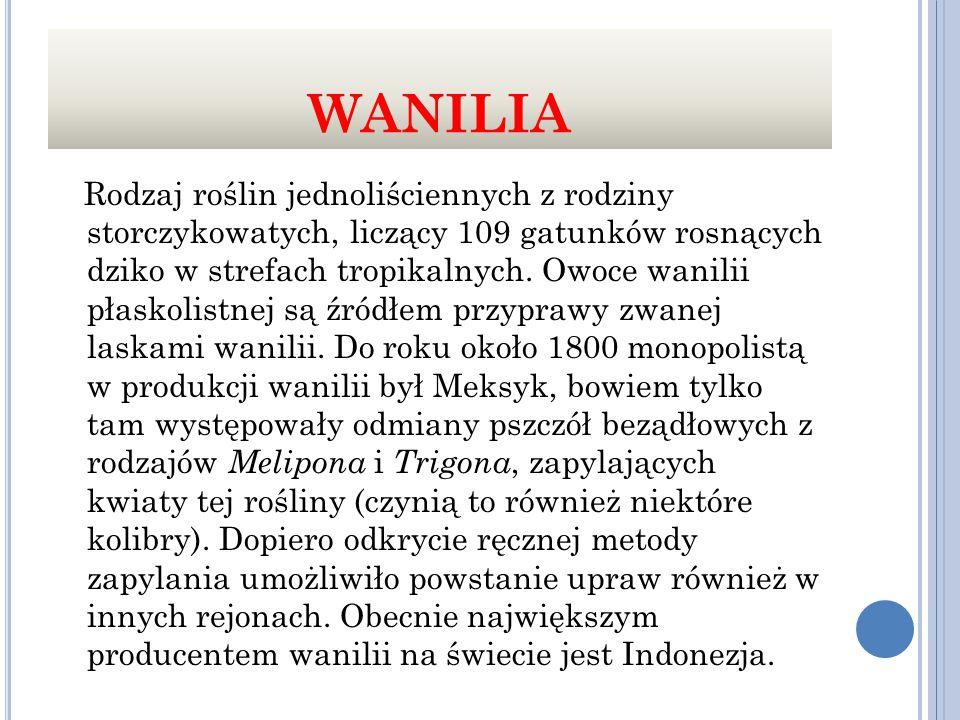 WANILIA Rodzaj roślin jednoliściennych z rodziny storczykowatych, liczący 109 gatunków rosnących dziko w strefach tropikalnych.
