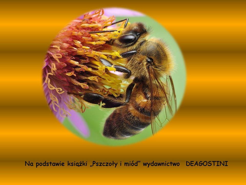 """Na podstawie książki """"Pszczoły i miód"""" wydawnictwo DEAGOSTINI"""