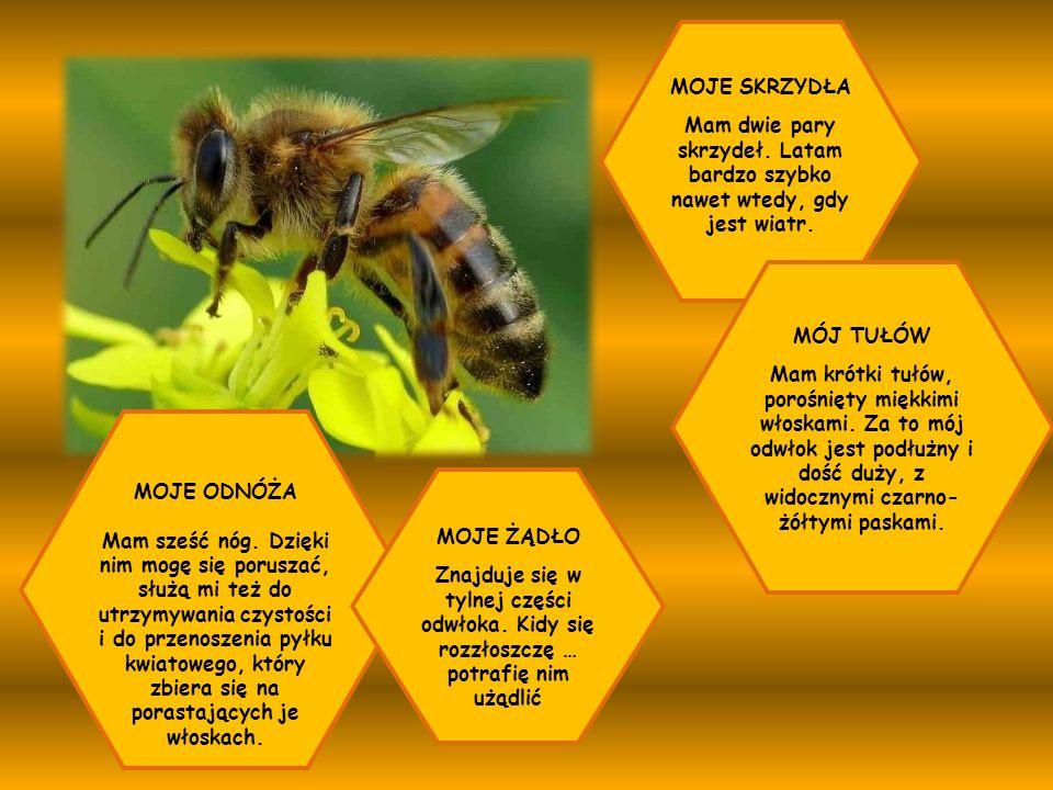 Pszczoły całą rodziną mieszkają w ulu.Na taką pszczelą rodzinę mówi się rój.