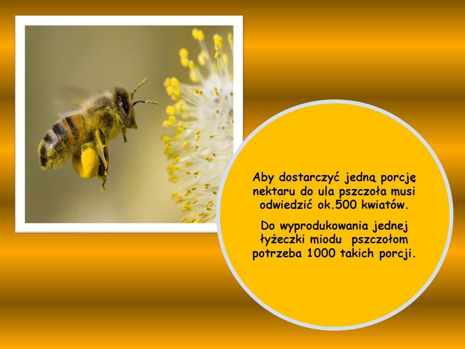 Aby dostarczyć jedną porcję nektaru do ula pszczoła musi odwiedzić ok.500 kwiatów. Do wyprodukowania jednej łyżeczki miodu pszczołom potrzeba 1000 tak