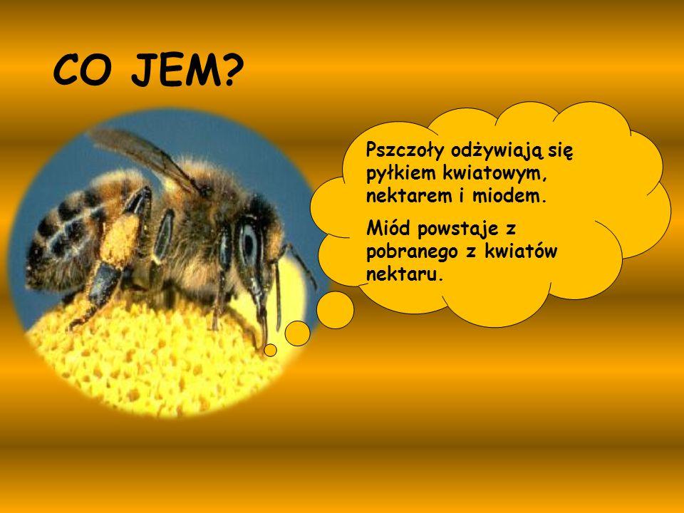 Pszczoły odżywiają się pyłkiem kwiatowym, nektarem i miodem. Miód powstaje z pobranego z kwiatów nektaru. CO JEM?