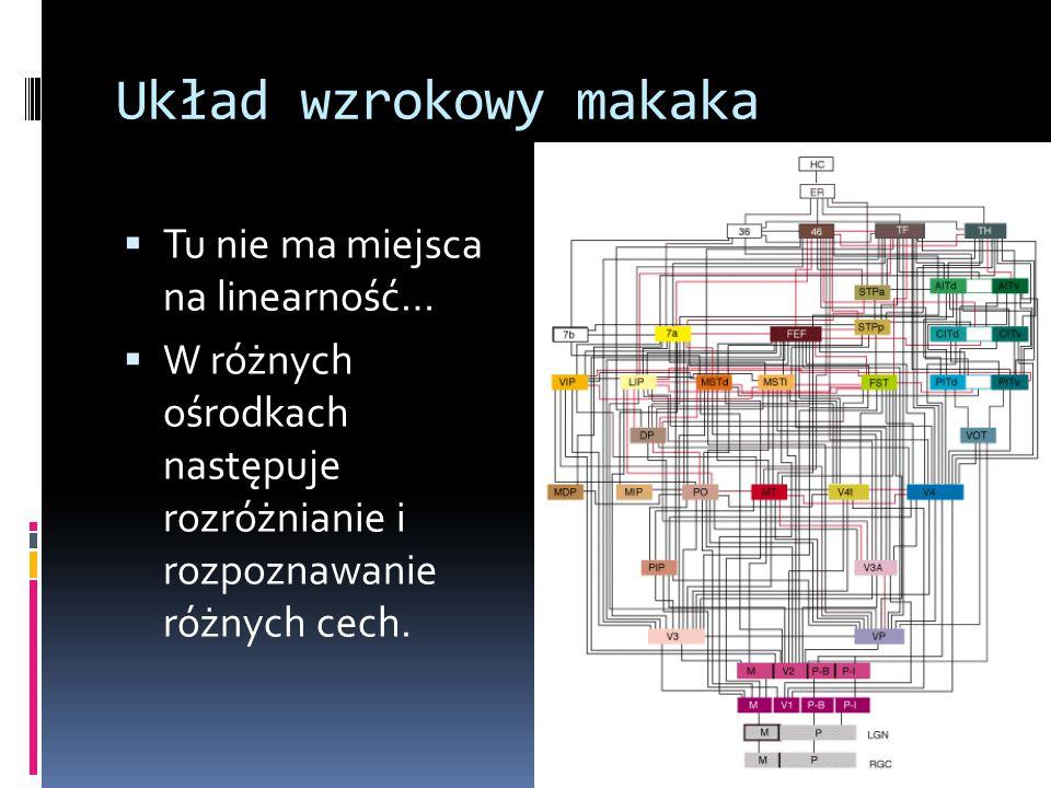 Układ wzrokowy makaka  Tu nie ma miejsca na linearność…  W różnych ośrodkach następuje rozróżnianie i rozpoznawanie różnych cech.