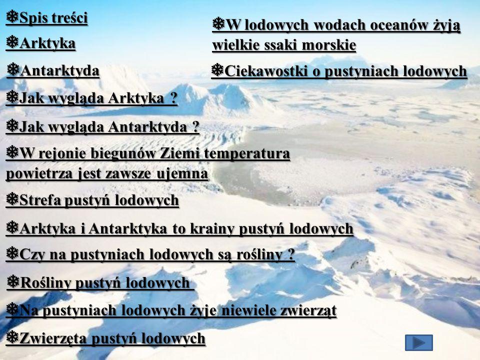 ❅ Zwierzęta pustyń lodowych Arktyka Morsy Niedźwiedź polarny Maskonur Antarktyka Słoń morski Pingwiny cesarskie Petrel śnieżny