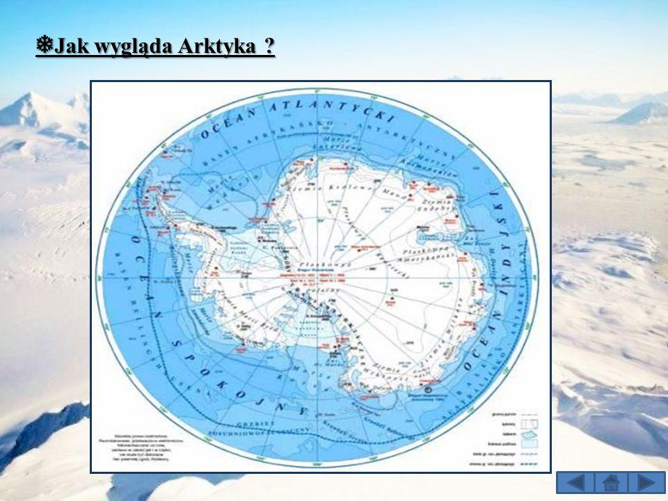 ❅ Jak wygląda Arktyka ?