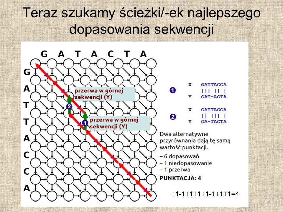 Teraz szukamy ścieżki/-ek najlepszego dopasowania sekwencji +1-1+1+1+1-1+1+1=4