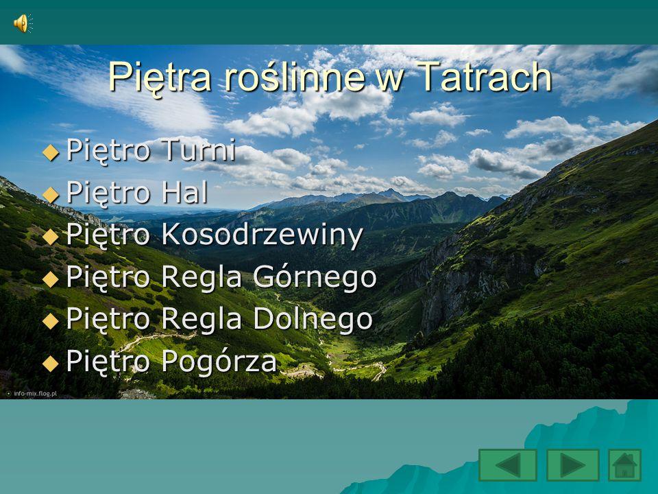 Piętra roślinne w Tatrach  Piętro Turni  Piętro Hal  Piętro Kosodrzewiny  Piętro Regla Górnego  Piętro Regla Dolnego  Piętro Pogórza