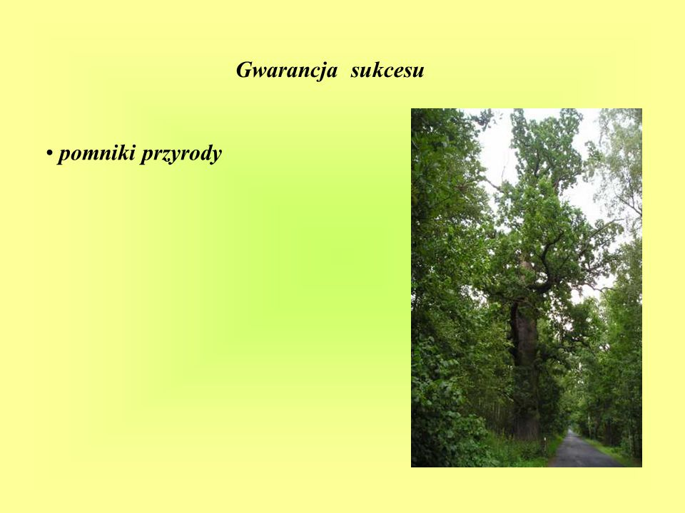 Gwarancja sukcesu lasy łęgowe, bory stobrawskie