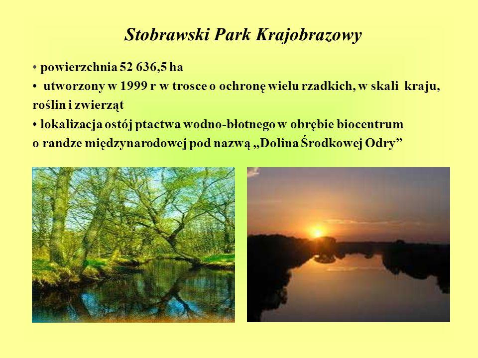 """Stobrawski Park Krajobrazowy powierzchnia 52 636,5 ha utworzony w 1999 r w trosce o ochronę wielu rzadkich, w skali kraju, roślin i zwierząt lokalizacja ostój ptactwa wodno-błotnego w obrębie biocentrum o randze międzynarodowej pod nazwą """"Dolina Środkowej Odry"""