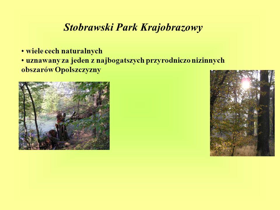 Stobrawski Park Krajobrazowy bogate środowisko leśne, liczne oczka, cieki wodne i bagienka i zadrzewienia śródpolne przedstawicieli fauny, z których wiele żyjących tu gatunków stanowi przyrodnicze zjawiska niespotykane na innych terenach kraju.
