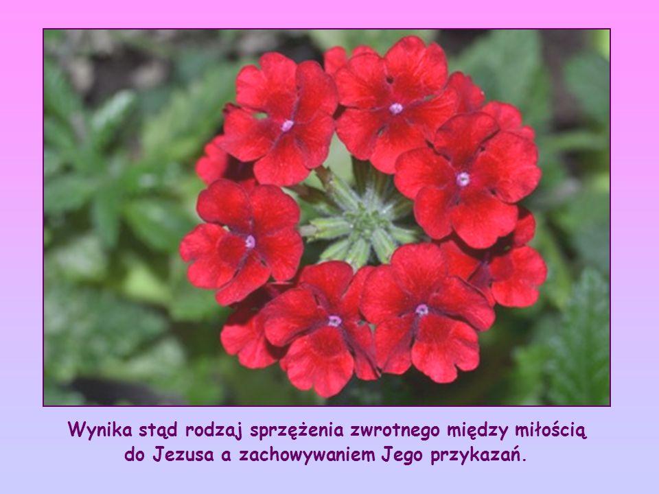 Zatem miłość do Jezusa powinna być przyczyną, korzeniem, z którego ma wyrastać zachowywanie Jego przykazań.