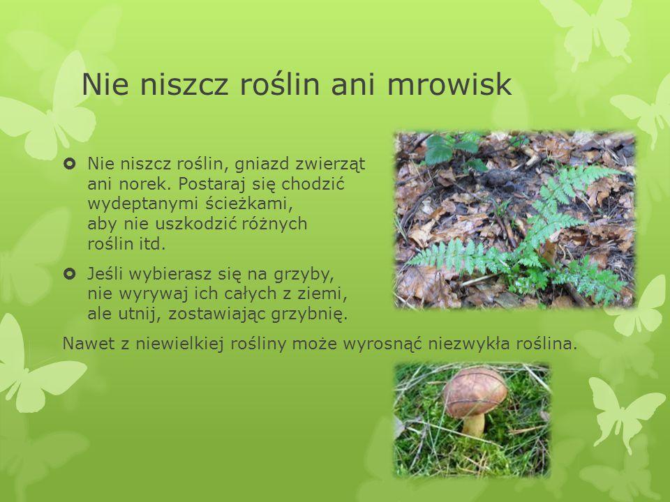 Nie niszcz roślin ani mrowisk  Nie niszcz roślin, gniazd zwierząt ani norek.