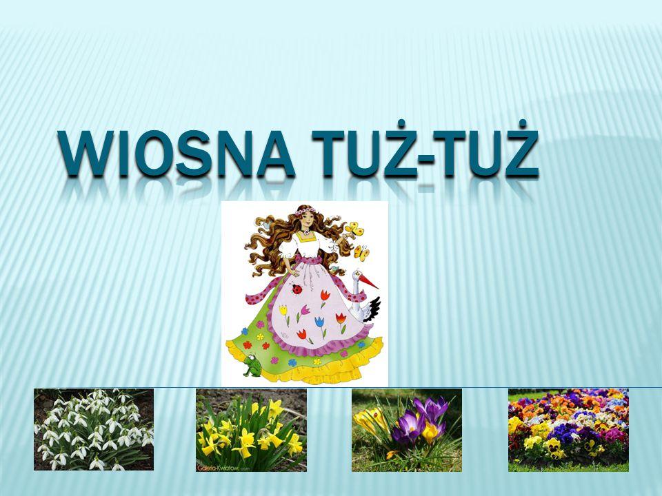 http://fotobabij2.blox.pl/2008/04/Hepatica-nobilis-przylaszczka- pospolita.html