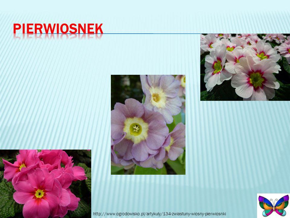 http://www.ogrodowisko.pl/artykuly/134-zwiastuny-wiosny-pierwiosnki