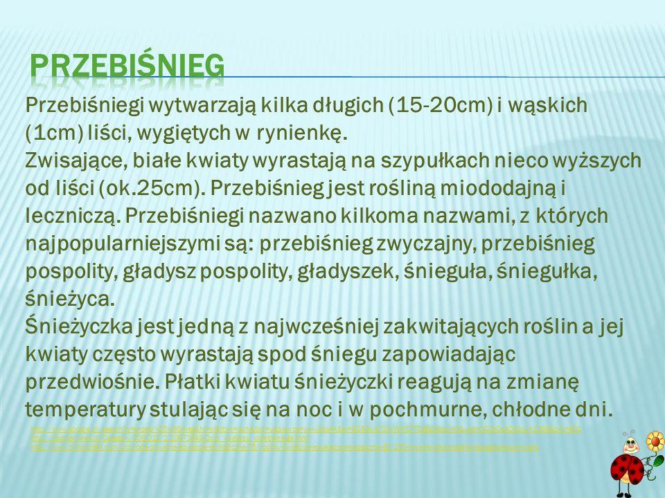http://ptaki.info/jerzyk