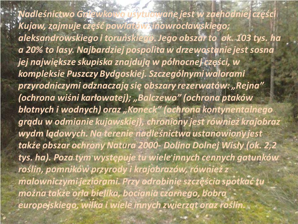 Nadleśnictwo Gniewkowo usytuowane jest w zachodniej części Kujaw, zajmuje część powiatów: inowrocławskiego; aleksandrowskiego i toruńskiego. Jego obsz