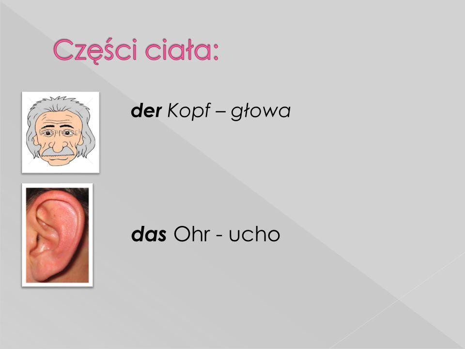  der Kopf – głowa das Ohr - ucho