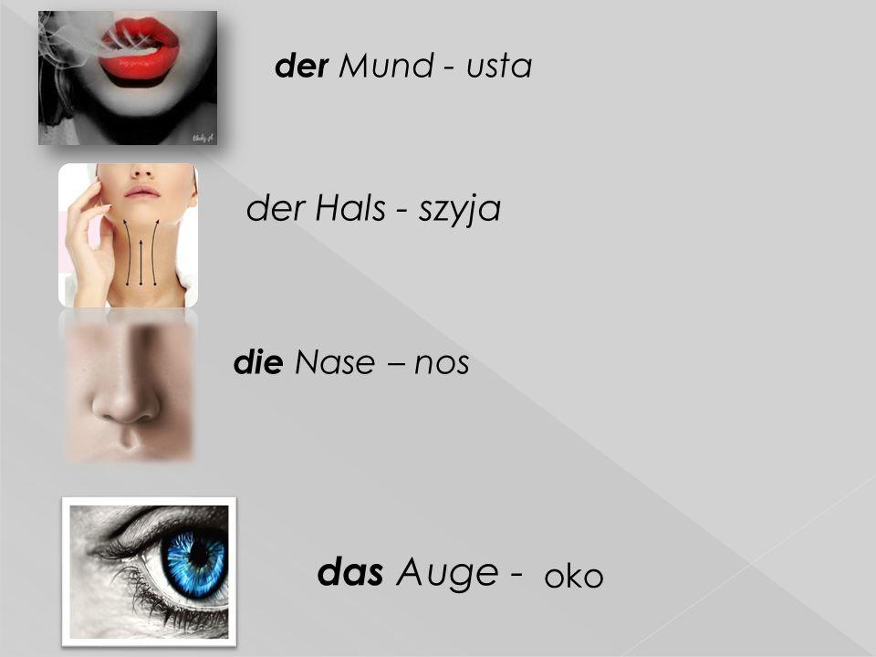  der Hals - szyja die Nase – nos das Auge - oko der Mund - usta