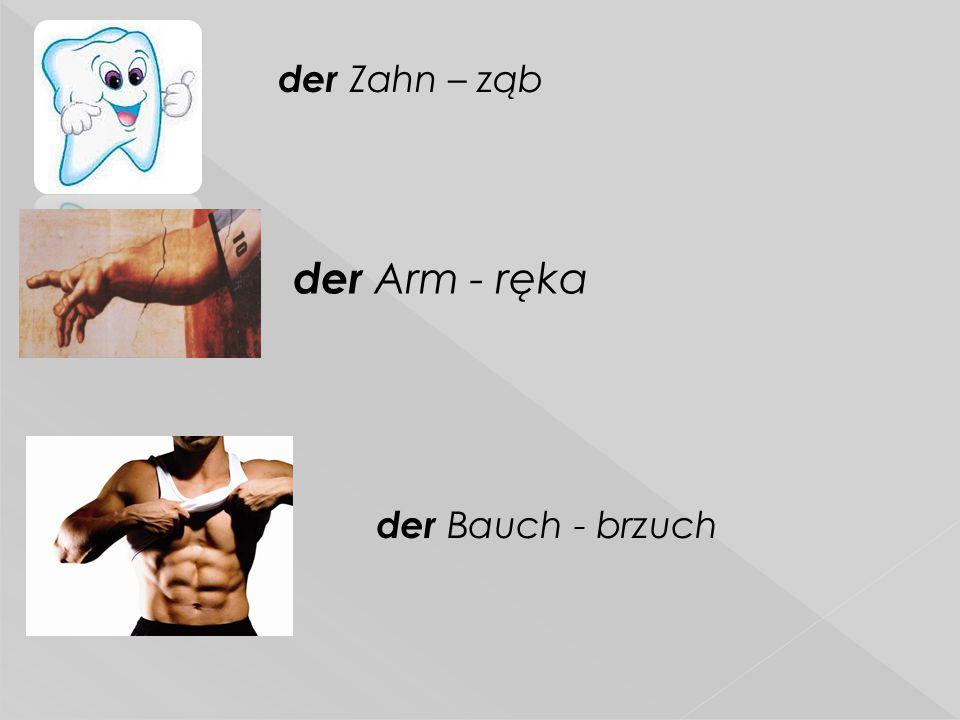  der Zahn – ząb der Arm - ręka der Bauch - brzuch